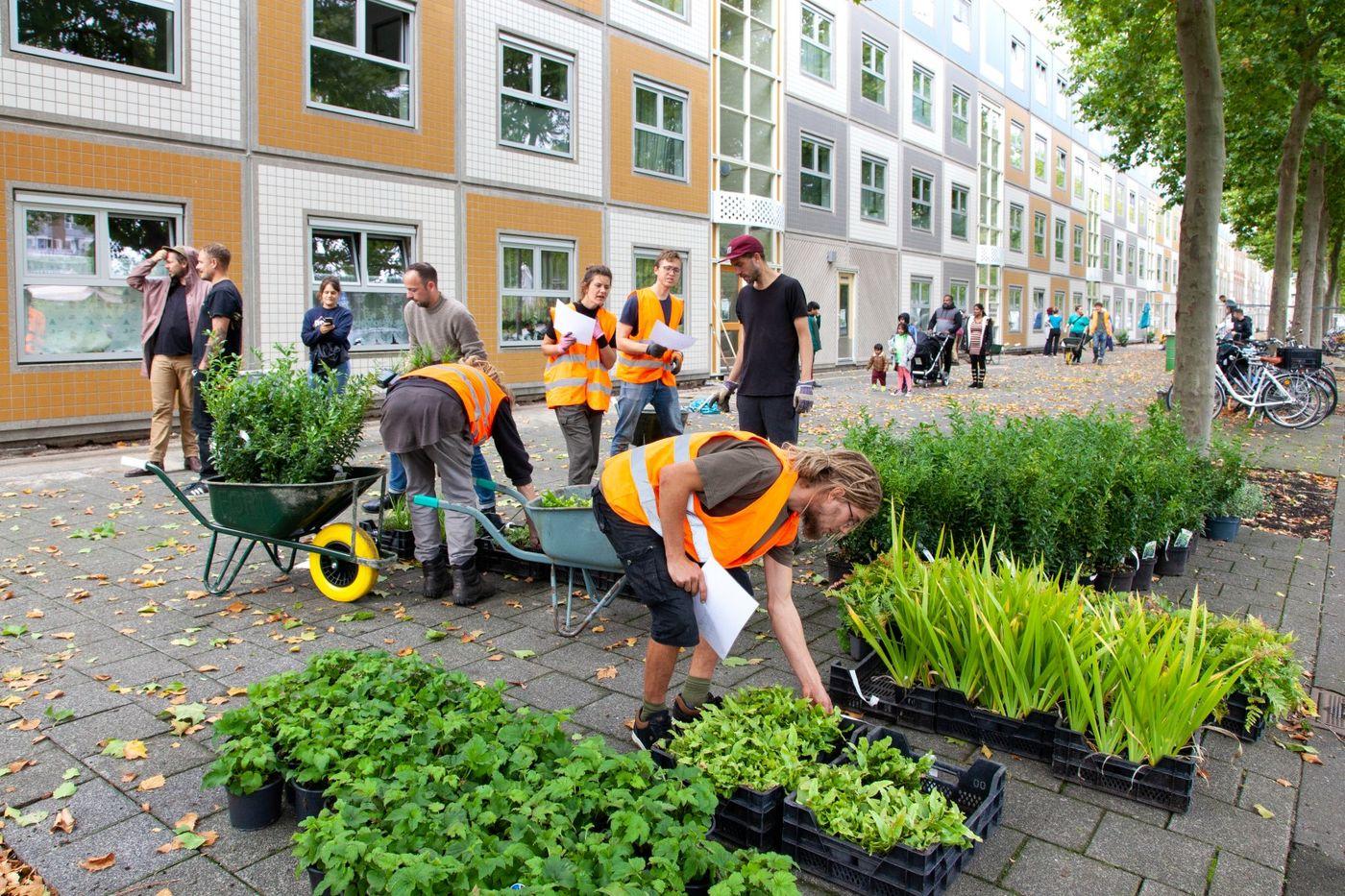 Cum reușesc orașele olandeze să creeze mai multe spații verzi?